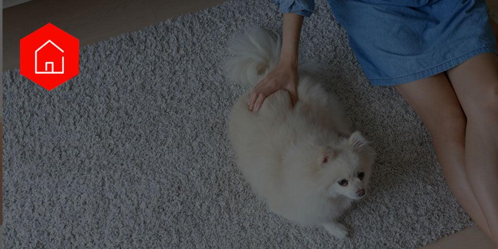 Animais no condomínio