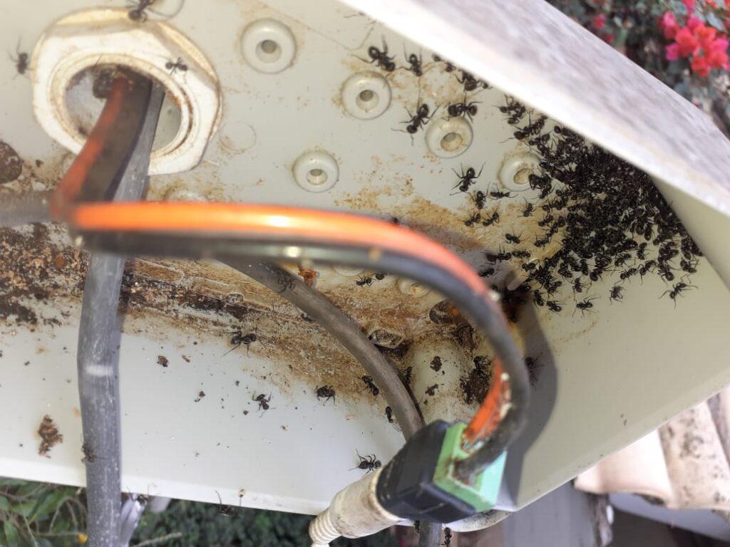 Faça a dedetização dos equipamentos de segurança para acabar com formigueiros